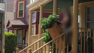 Police remove pot plants from a Moore Street home in Providence. (Photo: Steph Machado | WPRI 12)